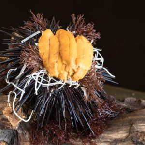 Urchin-Catalina