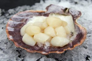 Baja Bay Scallops, Diver Caught